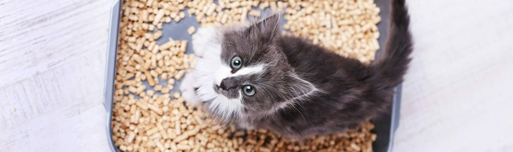 cat-fecal