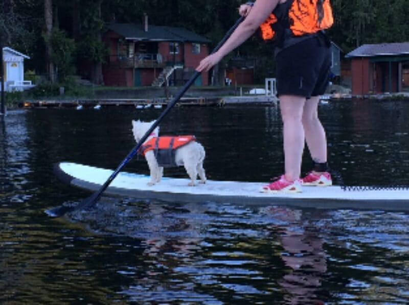 SUP with dogs